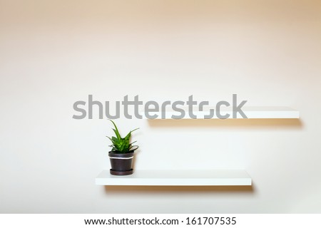 two shelves on the white wall and green plant in pot - stock photo