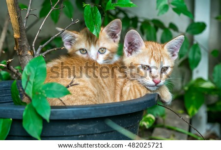 Two sibling small cute golden kittens lay curled up inside flowerpot in untidy outdoor backyard garden, selective focus on one's eye
