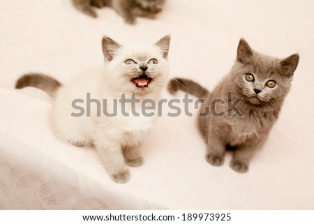 Two sitting kittens on pink background  - stock photo