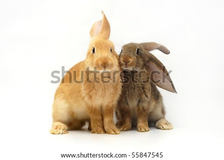 two sitting rabbit on the white background - stock photo