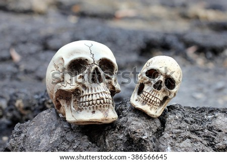 two skull human on wood table in still life style - stock photo