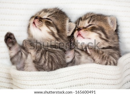 Two sleeping baby kitten - stock photo