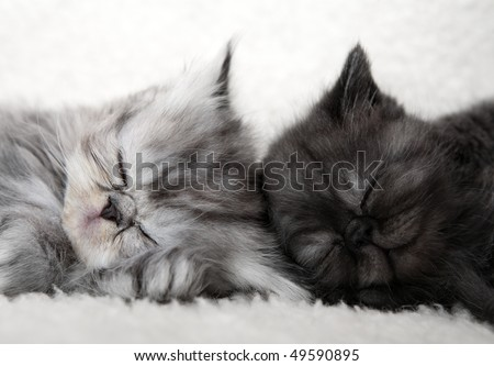 Two sleeping kittens - stock photo