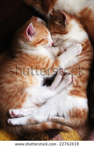 two sleeping kittens hug one another - stock photo