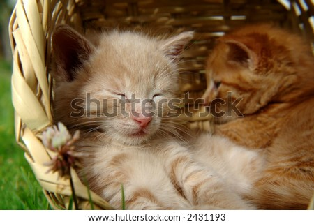 two sleeping kittens in the basket - stock photo