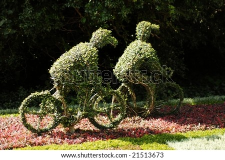 Two small bushes trimmed to the shape of cyclists - stock photo
