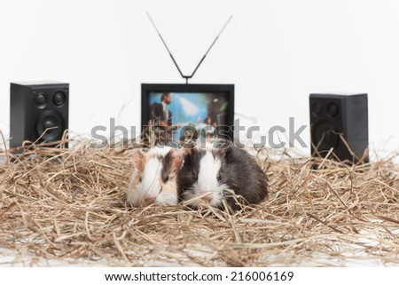Two small hamsters on white isolated background. Two nice hamster sitting with tv and speakers behind - stock photo