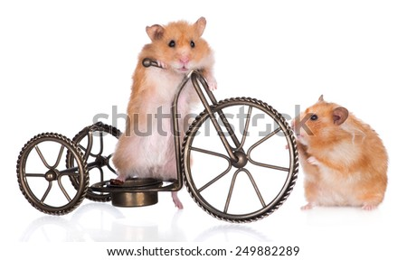two small hamsters with a bicycle - stock photo