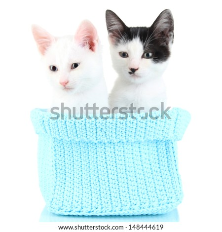 Two small kitten in blue knitting basket isolated on white