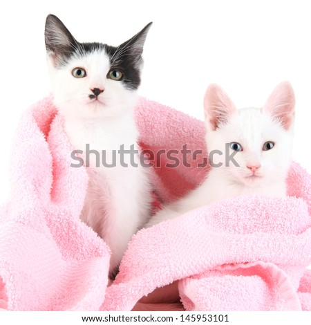Two small kitten in pink towel isolated on white