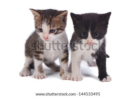 two small kitten isolated on white background - stock photo