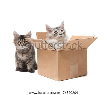 Two small kittens in a cardboard box - stock photo
