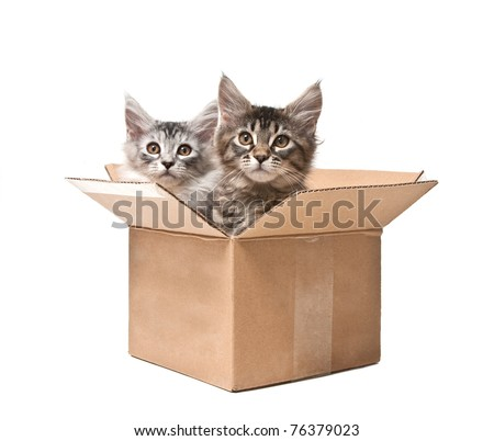 Two small kittens in a cardboard box against white background - stock photo
