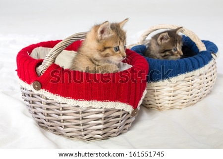 Two small kittens in different wicker baskets - stock photo