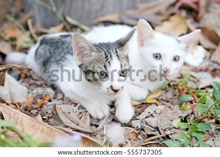 Two small  kittens in nature.