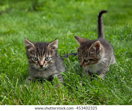 Two small  kittens standing in the grass messing around