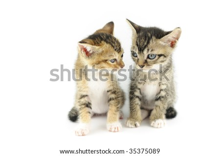 Two small kittens watching each other, over white backgrund - stock photo