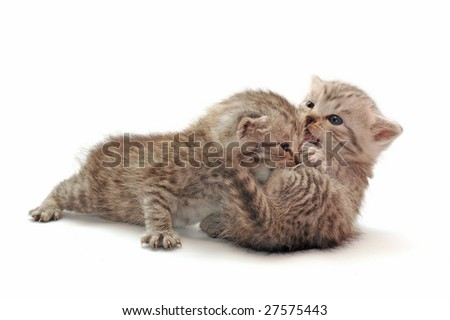 Two small kittens who play