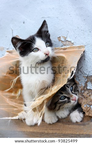 Two small stray playful funny kitten look out of hiding - stock photo