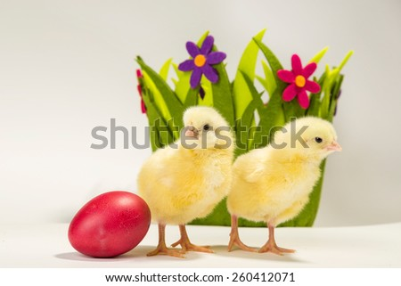 Two small yellow chickens standing next to painted Easter egg with green basket with flowers in the background - stock photo
