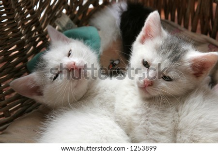 Two small young kittens lying close together in their basket - stock photo