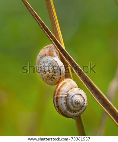 Two snail on  dewy grass - stock photo