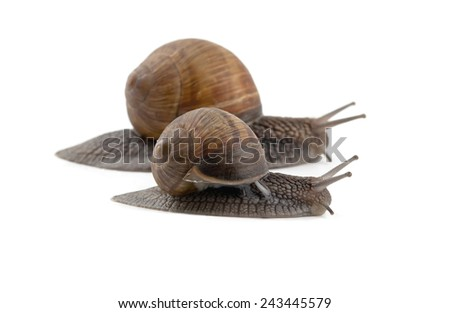 two snails isolated on a white background  - stock photo