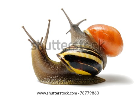 Two snails looking at background, isolated over white - stock photo