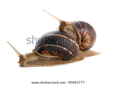 Two snails on a white background