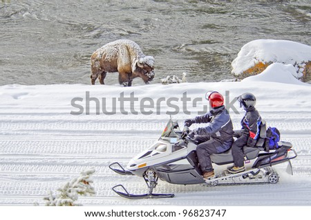 Two snowmobilers view a bison in Yellowstone National Park, Wyoming, U.S.A.. - stock photo