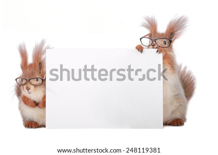 two squirrels wearing spectacles with a leaf for the text. - stock photo