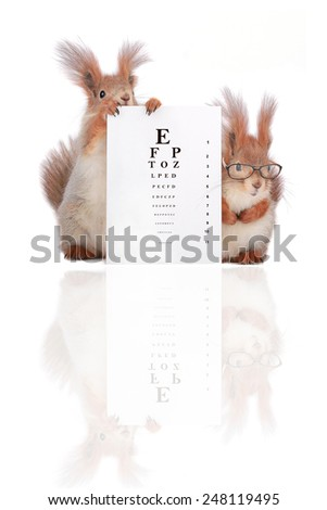 two squirrels with with the optometric table on a color background - stock photo