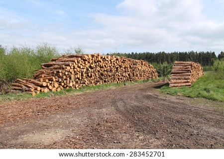 Two Stacks of Freshly Cut Pine Forestry Logs. - stock photo