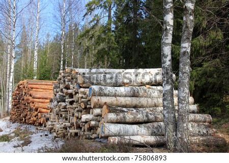 Two Stacks of Wooden Logs in Forest: Pine and Birch - stock photo