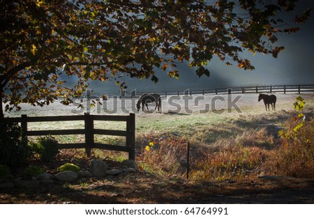 Two stallion horses graze in early morning frost and mist of autumn in the NC mountains - stock photo