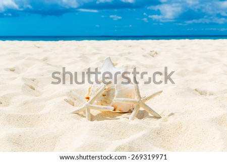 Two starfish and large shell on a sandy tropical beach. - stock photo