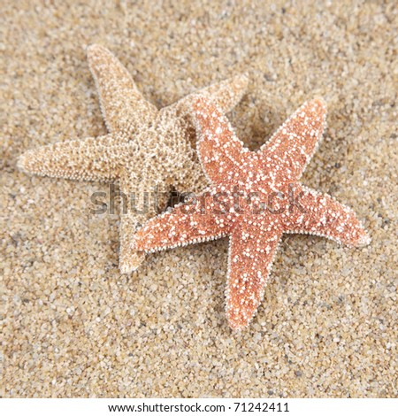 Two starfish in the beach sand - copy space - stock photo