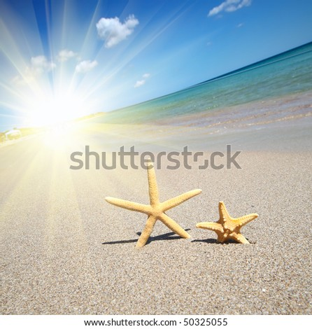 two starfish on a beach - stock photo