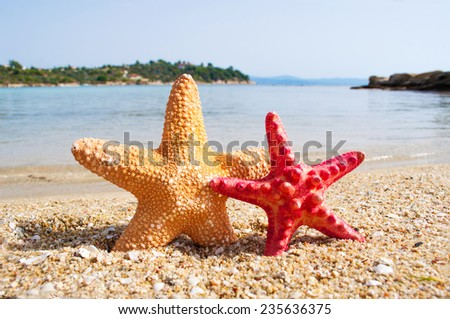 Two starfish on the beach - stock photo