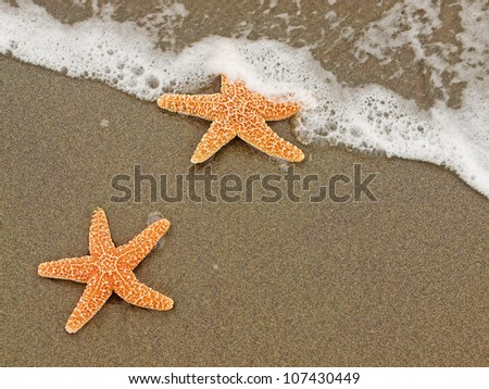 Two Starfish on the Shoreline with Waves - stock photo