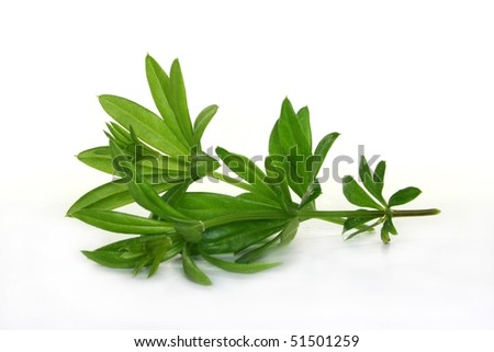 two stem Woodruff on a light background