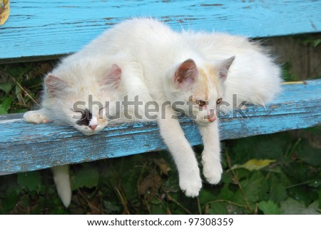 Two stray cats resting on the bench - stock photo