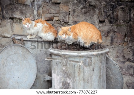 Two stray cats sit on garbage bins - stock photo