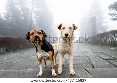 Two stray dog standing close to each other in foggy day. Pets - stock photo