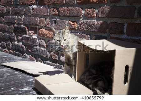 two stray striped cats sleeping end resting in a box in a castle court