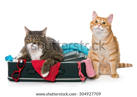Two striped cat lying with a suitcase for a holiday trip. isolated on white - stock photo