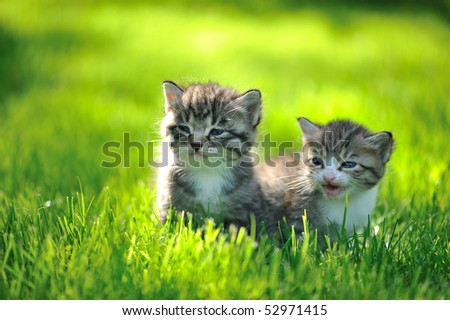 Two striped kittens sitting in the grass - stock photo