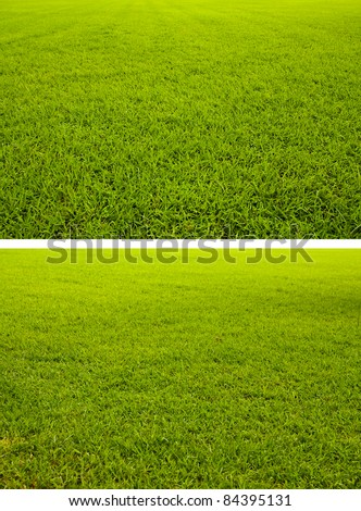 Two styles of grass field included straight and tilted background texture - stock photo
