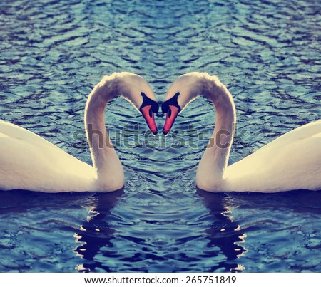 two swans in a blue lake or river making the shape of a heart with their necks toned with a retro vintage instagram filter effect app or action  - stock photo