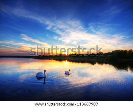 Two swans on a calm lake, Ireland. - stock photo